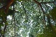 Амазонский лес