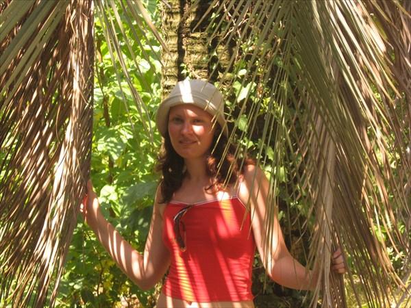 В пальмах