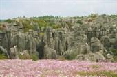 Каменный Лес в нацпарке Шилинь