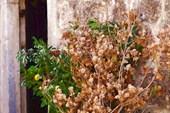 2013-01-06--15-47-48 Тот самый бадняк и ветки лавра и цитрусовых