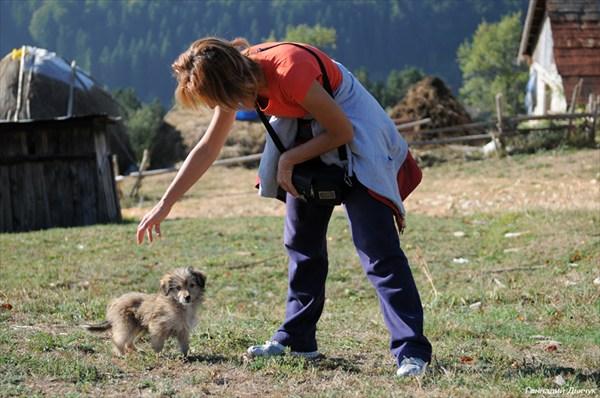 Нова-Варошский щенок, очаровавший Светлану