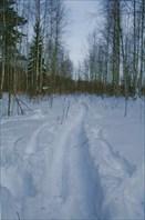 Наша лыжня по болоту до места 1ой стоянки