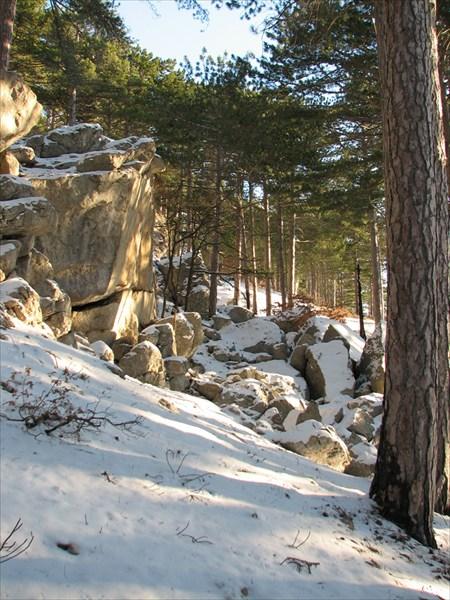 на фото: Зимний лес
