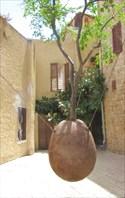 Yaffa_orange2-Висящее апельсиновое дерево