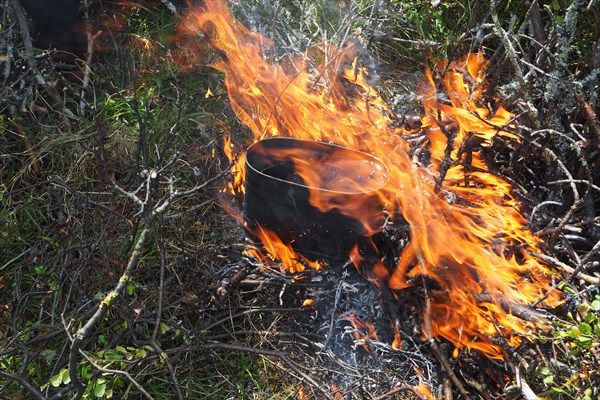 Огненная грива