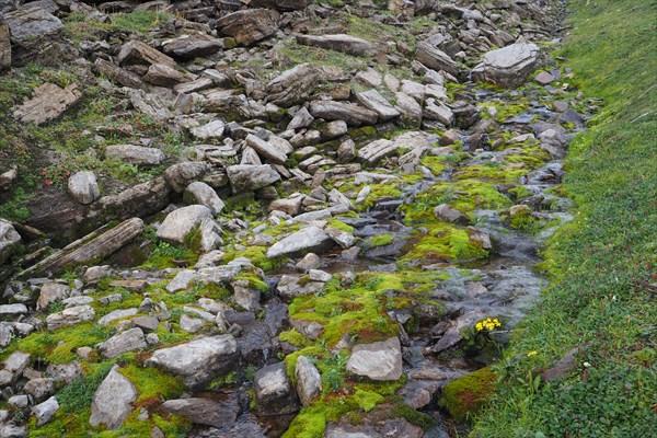 Зелёный ручей