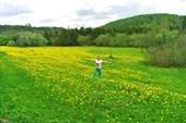 Одуванчиковое поле.