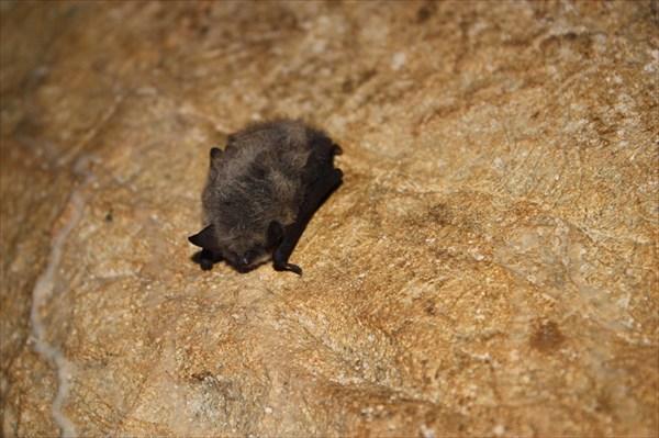 Аборигенка Новомурадымовской пещеры