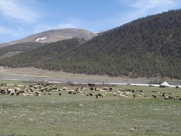 Первые стада