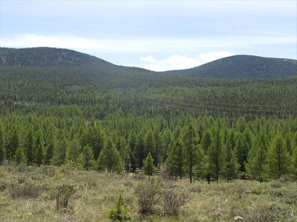 Тувинские леса