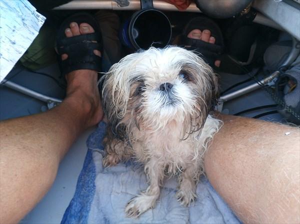 Юнга Фунтик - единственная собака, обошедшая на байдарке Крым