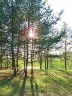В тени деревьев