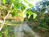 Лесные тропы