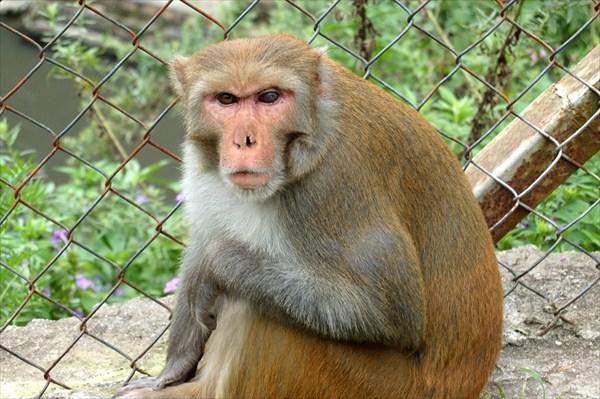 Kathmandu, Angry Monkey