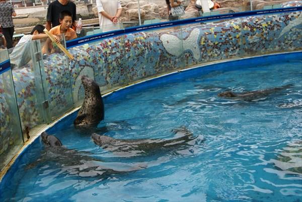 Далянь. Парк морских животных