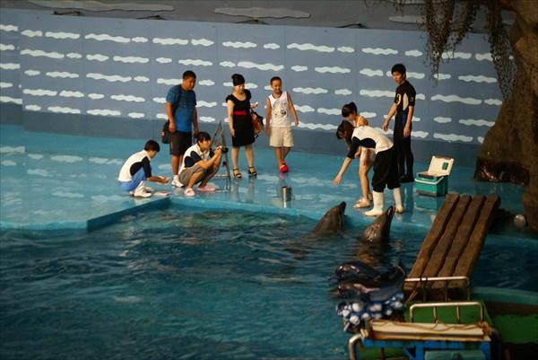 Далянь. Дельфинарий. После представления