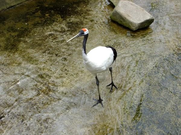 Даляньский парк птиц