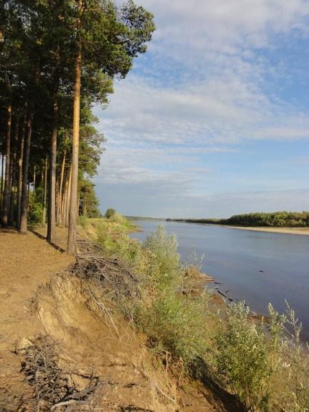Сосновый лес у Тагильцов.