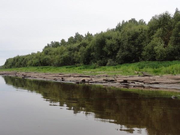 Бревна лежат вдоль берега километрами.