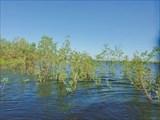 У острова, кусты в воде