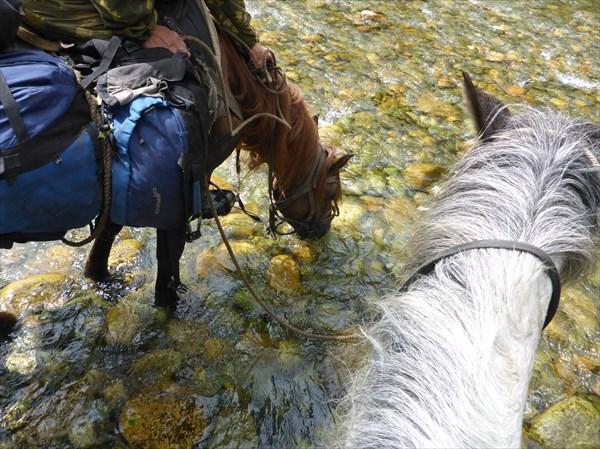 Напоить коня!