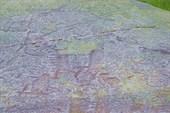 Наскальные рисунки древних людей - Канозерские петроглифы