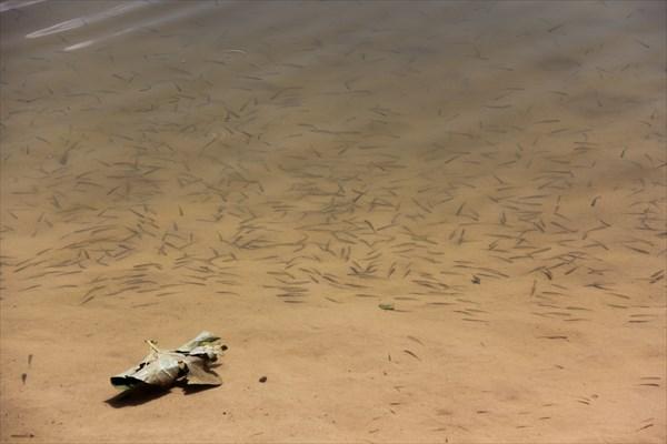 Мальки у берега