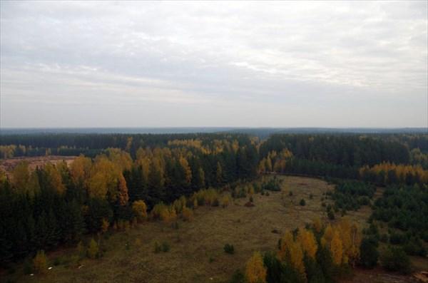 Лиственных деревьев меньшинство