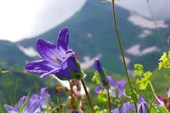Альпийские луга в горах Архыза