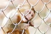 обезьянка..