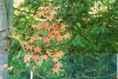 растительность бот. сада Сухума