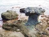 Каменный гриб