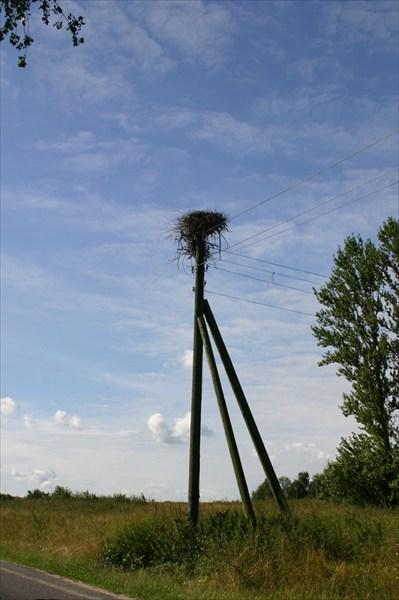 И везде гнезда аистов