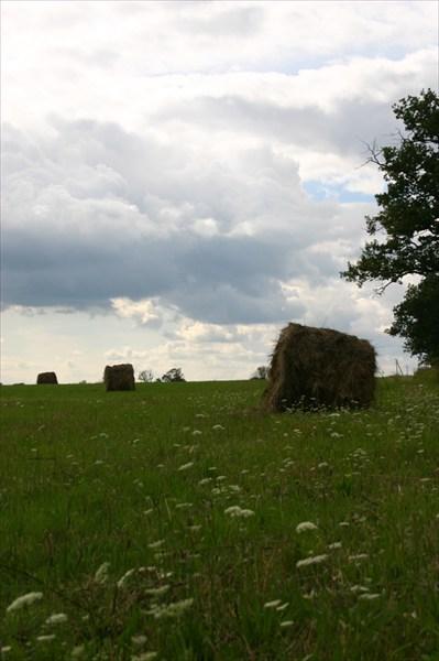 отдых в поле