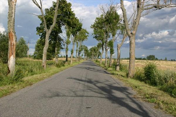 Типичный дорожный пейзаж Калининградской области