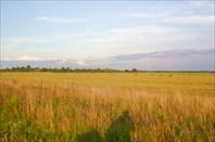 а кургом поля, поля, поля