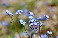 Местная флора
