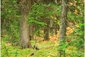 Лес дремучий.