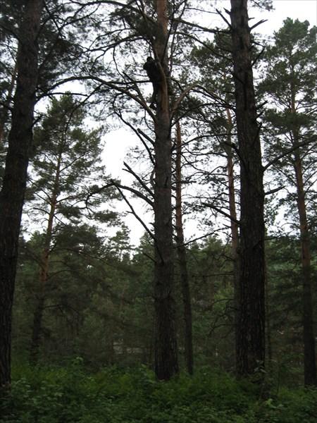 Илья добывает дрова