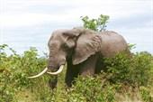 Африка, сафари IMG_0296