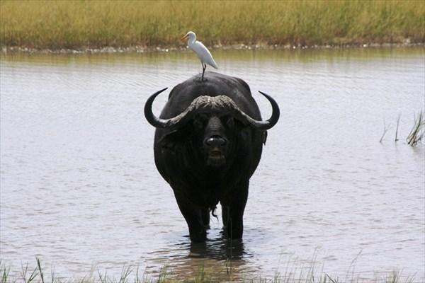 Африка, сафари IMG_0006