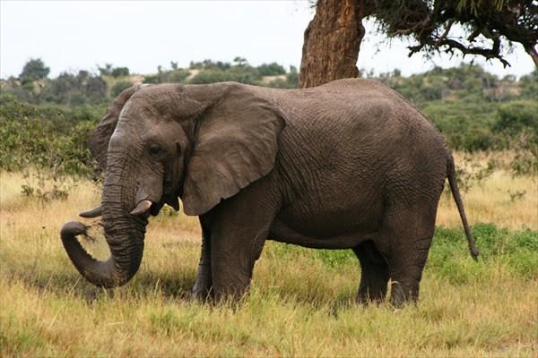 Африка, сафари IMG_0179