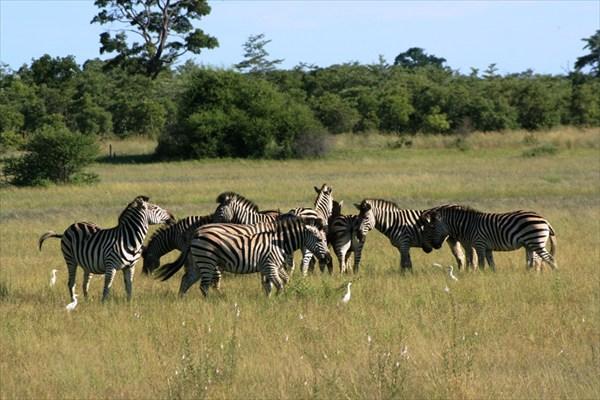 Африка, сафари  IMG_9302