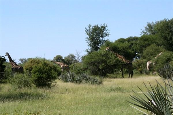 Африка, сафари IMG_9355