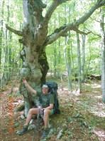 Я и причудливые деревья