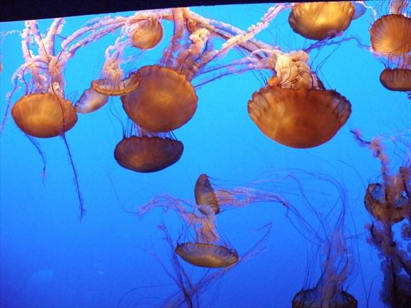 201-Медузы