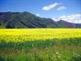 Цветочное поле в Кайтанаке