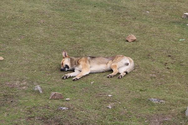 Сон после обеда