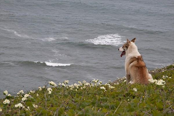 Собака и море