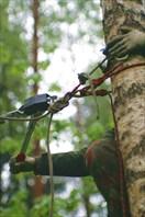 Развлекательная веревочная трасса на слете турклуба Ветер МСХА